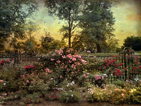 Rose Garden with Trellis